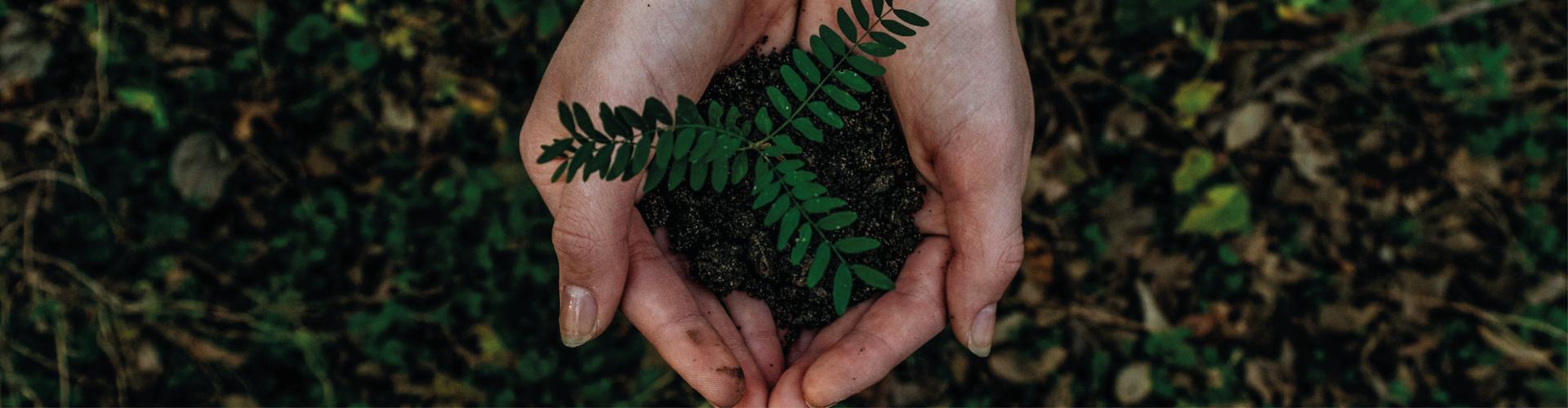Ambiente, verde e rifiuti Comune di salve